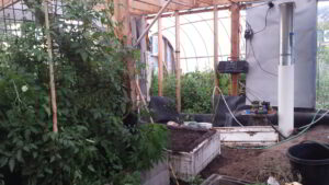 A photo inside a climate battery powered greenhouse.